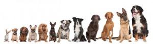 Grundausbildung @ Hundesport Akademie Westfalen | Lübbecke | Nordrhein-Westfalen | Deutschland
