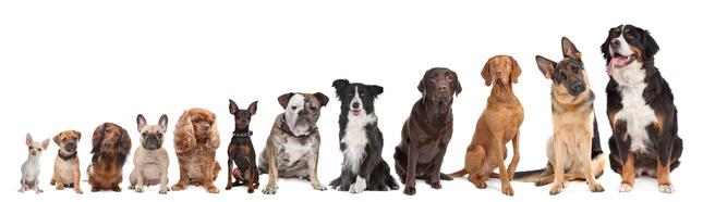 gruppe_hunde