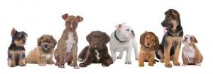Welpenkurs @ Hundesport Akademie Westfalen | Lübbecke | Nordrhein-Westfalen | Deutschland