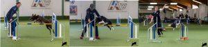 Intensiv-Trainng mit Monika Behrendt, Thomas Behrendt + Nora Wolkowski @ Hundesport Akademie Westfalen | Lübbecke | Nordrhein-Westfalen | Deutschland