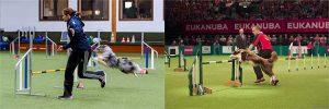 Intensiv-Trainng mit Thomas Behrendt + Monika Behrendt @ Hundesport Akademie Westfalen | Lübbecke | Nordrhein-Westfalen | Deutschland