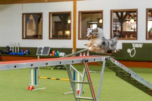Running Contacts Seminar @ Hundesport Akademie Westfalen | Lübbecke | Nordrhein-Westfalen | Deutschland
